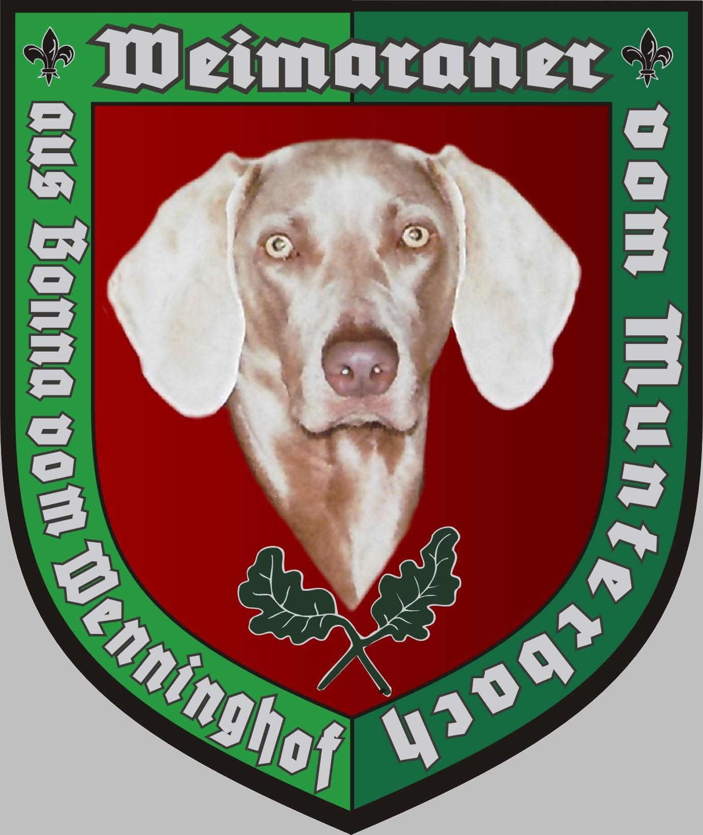 Weimaraner vom Munterbach